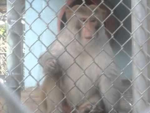 Angry monkey.. O_o