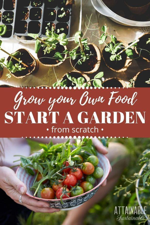 Pflanzen Sie Ihren eigenen Garten. So beginnen Sie einen Gemüsegarten von Grund auf neu und ernten frisches Gemüse aus Ihrem eigenen Garten! Ob du in einer Stadt lebst #gemüsegartenanlegen