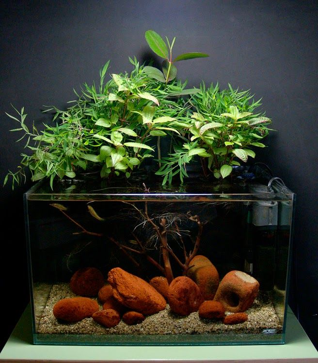 How To Setup A Planted Aquarium For Betta Fish Fighter