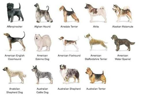 Hunting Dogs Breeds List Dog Breed Finders Dog Breed Finder Dog Breeds List Hunting Dogs Breeds