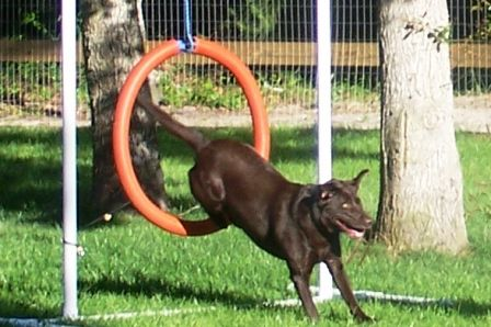 Dog Agility Training Myrtle Beach Sc