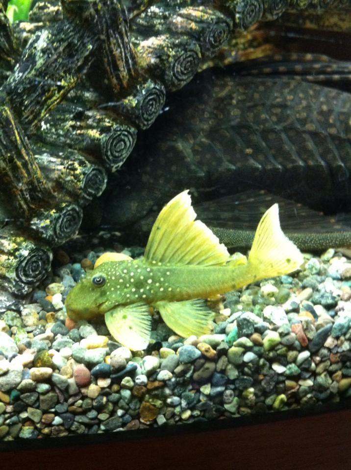 Pin By David Frank On Life In Water Tropical Fish Aquarium Tropical Fish Tanks Aquarium Fish