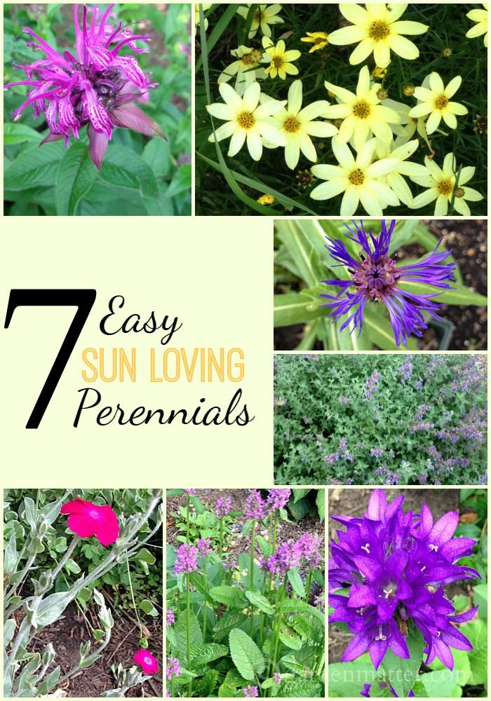 7 easy sun loving perennials worth planting cut flowers for Easy to care for flowers outdoor