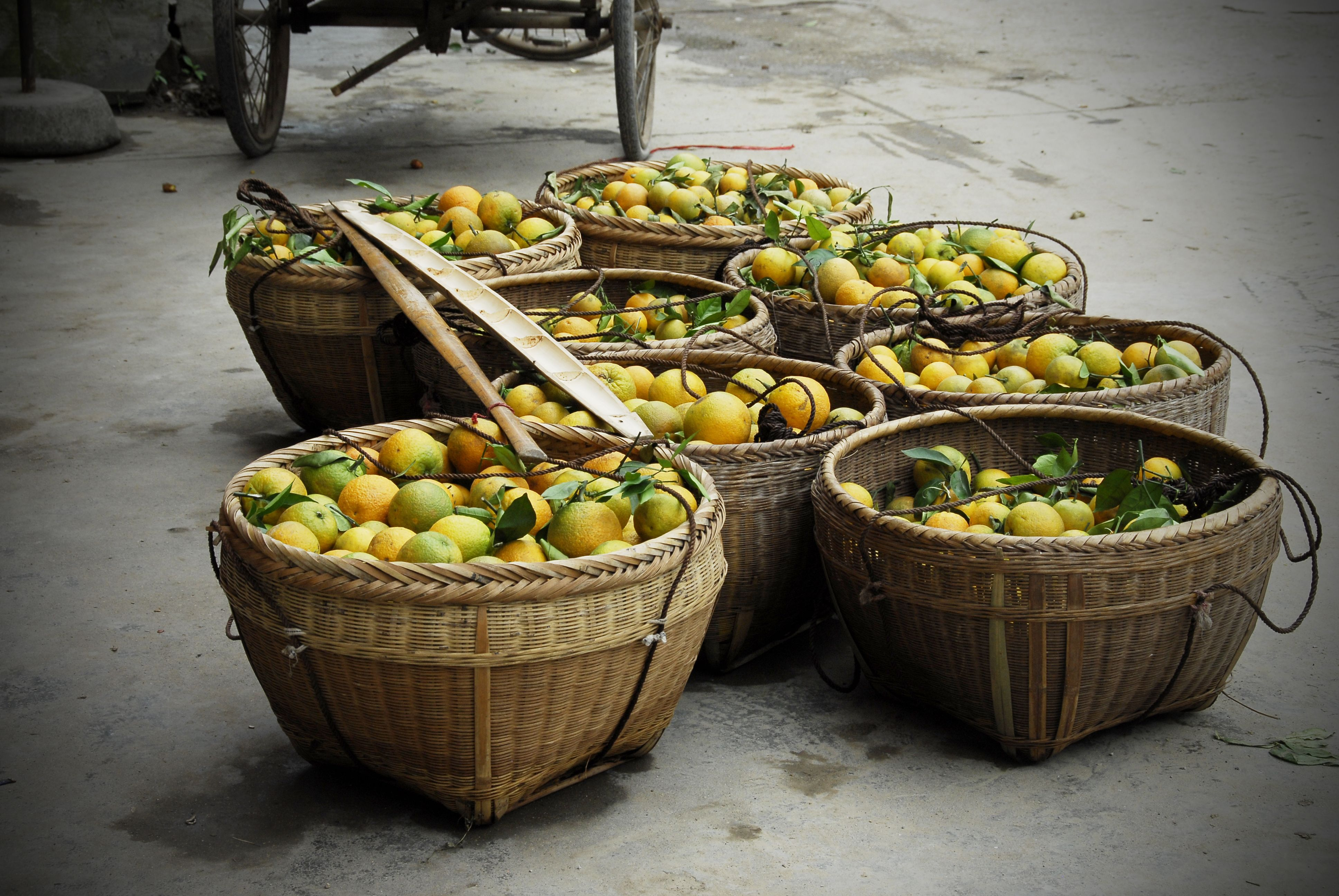 Baskets of peaches xing ping market china peach food