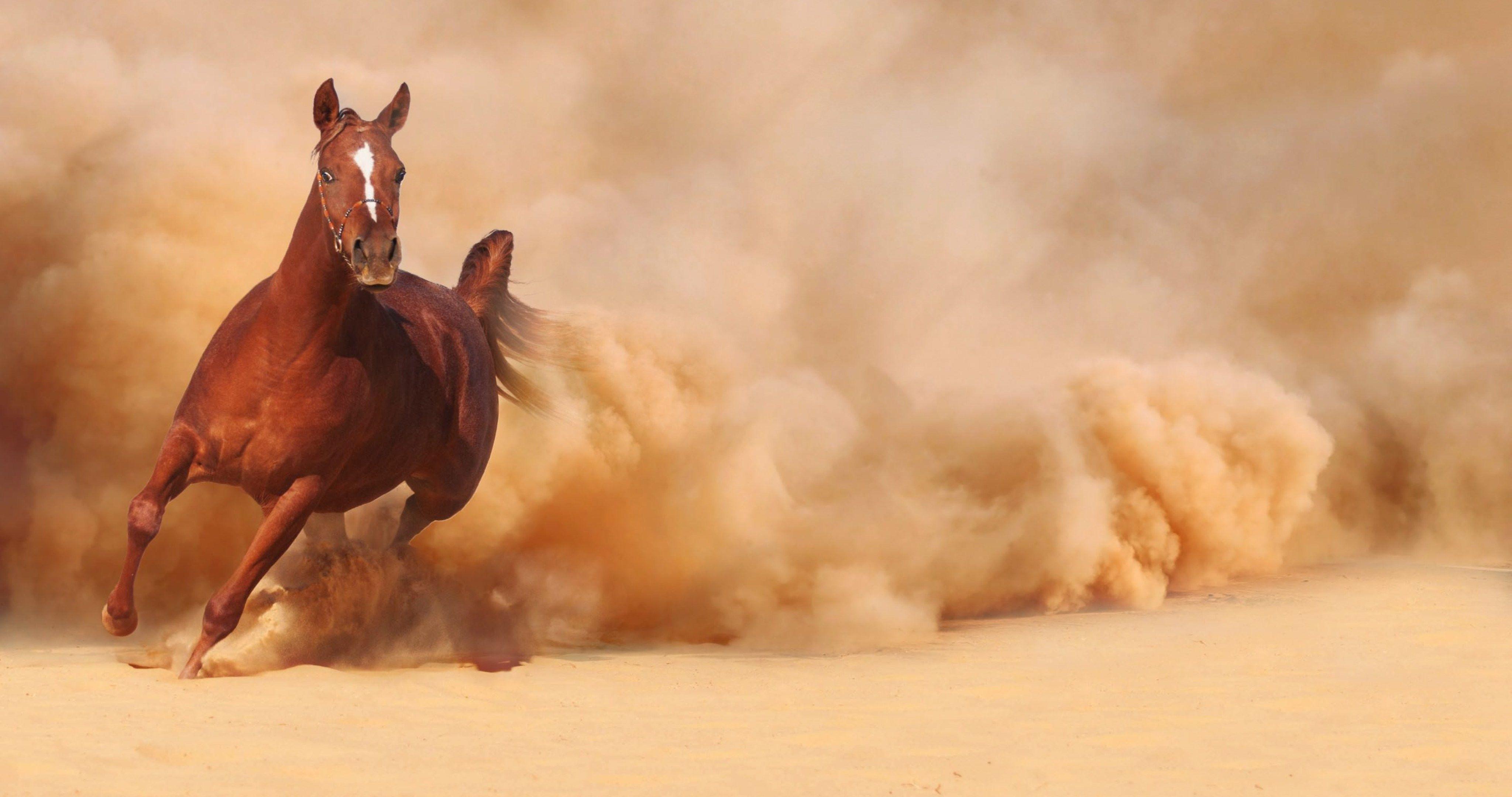 Great Wallpaper Horse Ultra Hd - 26d0237d7031a83f562cff0039ee0a78  Pic_605811.jpg