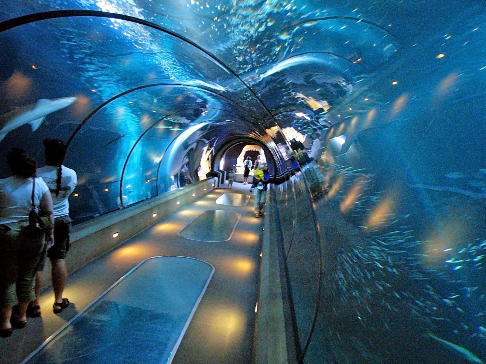 Aquarium In New York City