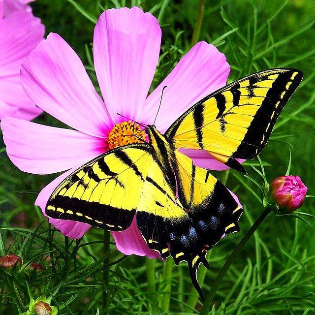 Butterflies Are Blooming Frederik Meijer Gardens