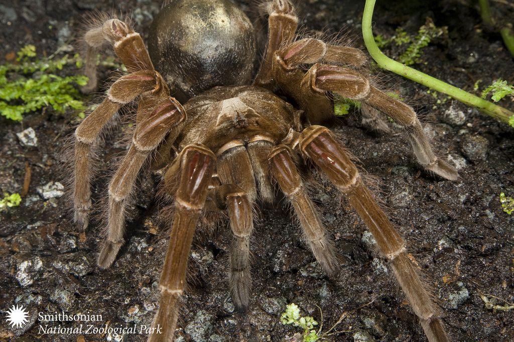 26d1bc54e6e0802d9c242299119cfe37 - How To Get Rid Of Crab Spiders In Hawaii