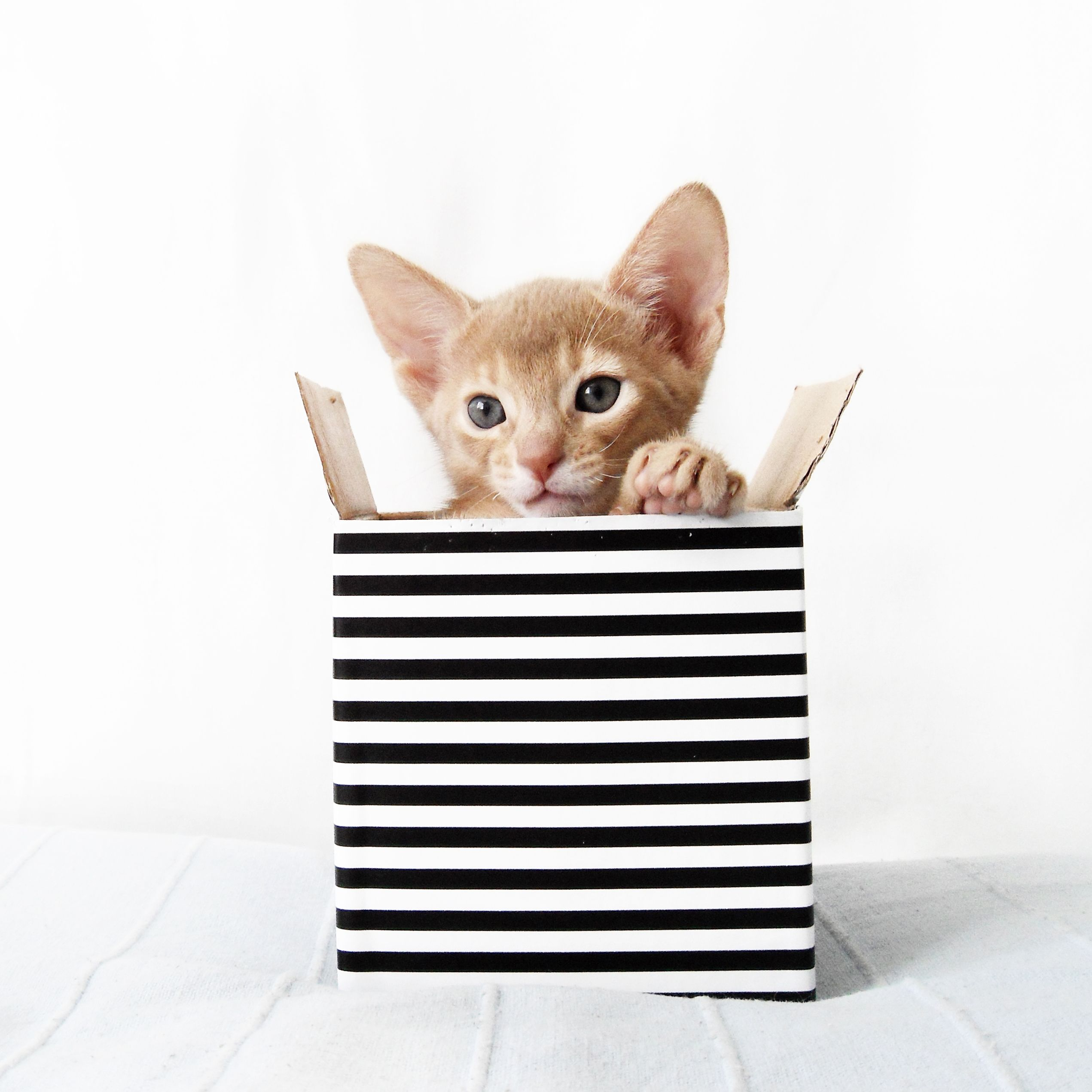 Kitten in a striped box | Abyssinian cat and me | Pinterest ...