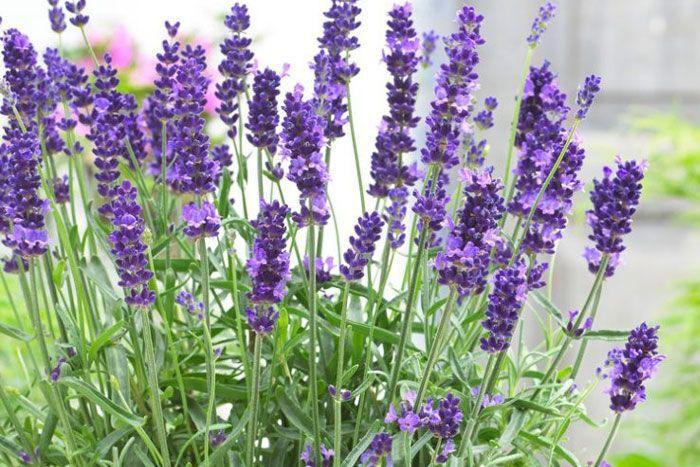 butterfly garden #gardencare Best flowers for Bees and Butterfly Garden | Pollinator Garden #mosquitoplants