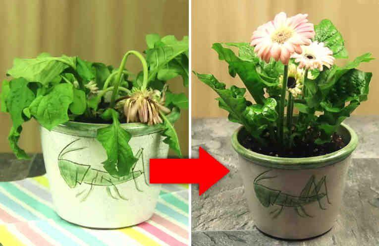 echa solo 3 cosas a tus plantas sin vida, y ellas crecerán como