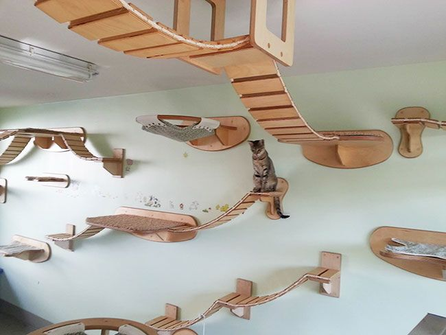 A compilation of overhead cat playgrounds with walkways: Yeah right!