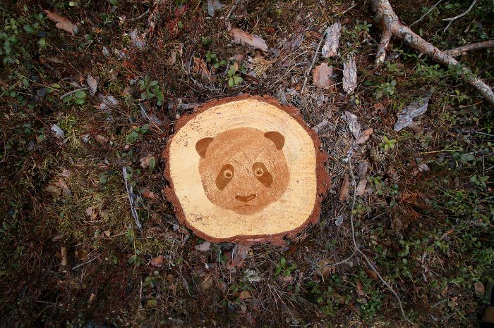 Deforestation Faces: I Show That We Kill Animals When We Destroy Forests