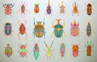 Coleoptera, from the Waterhouse Natural History Art Prize @South Australian Museum