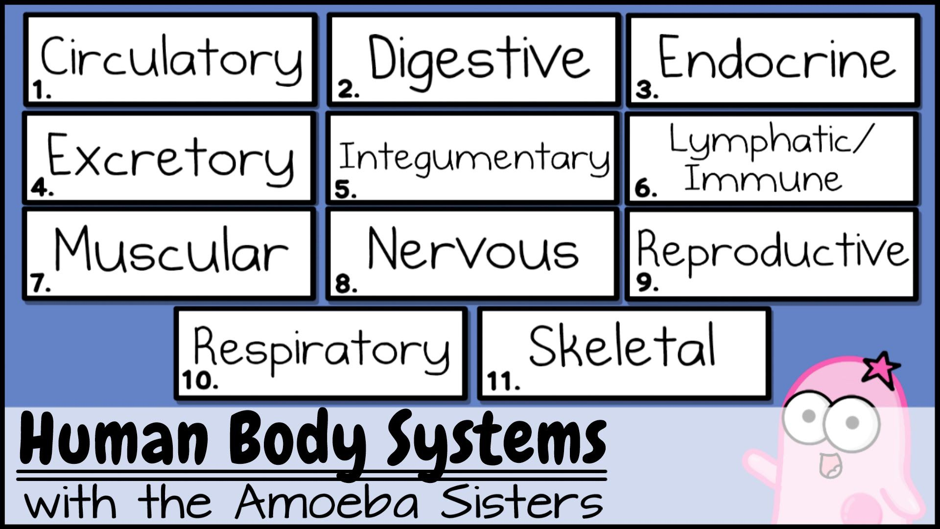This Is The Updated Amoeba Sisters Human Organ Systems Video Which Provides A Brief