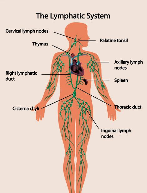 Lymphatic System Google Search Ap Pinterest Medical Facts