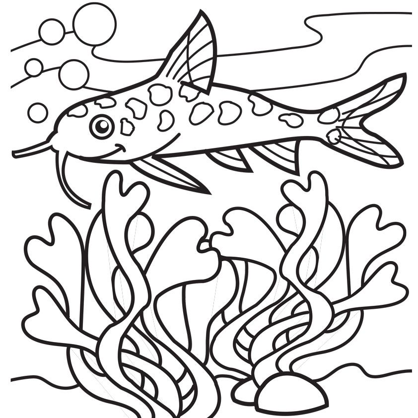 catfish and seaweed coloring pages