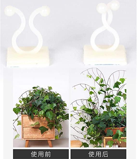 Clips De Support Pour Plantes Grimpantes Lot De 100 Plante Grimpante Support Tuteur Clips Fixateu En 2020 Plante Grimpante Plante Grimpante Interieur Support Plante