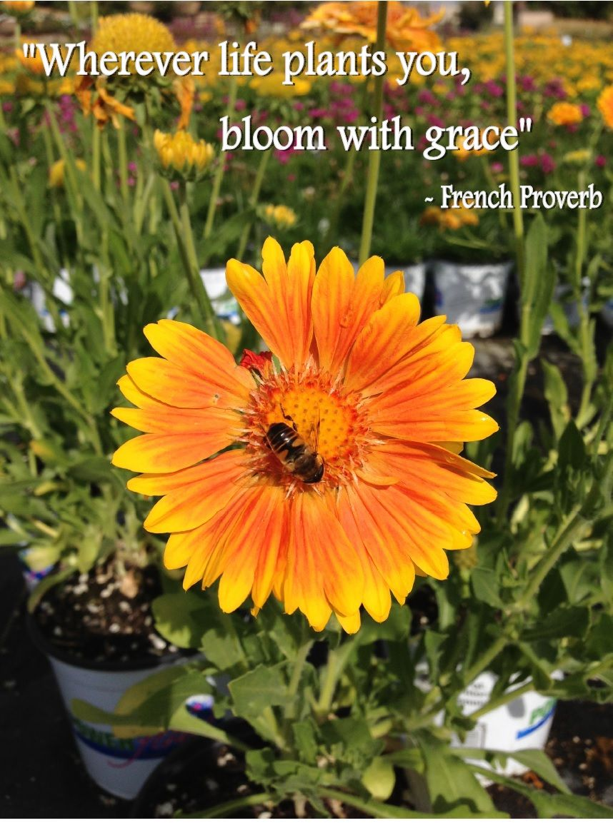 Bloom with Grace Gardening Quote Garden quotes, Flower