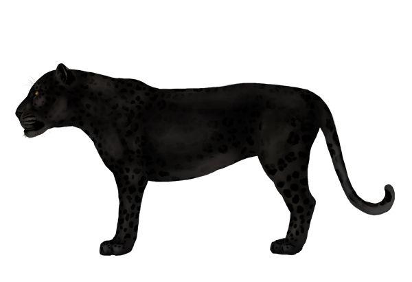 Пантера картинка для детей на прозрачном фоне