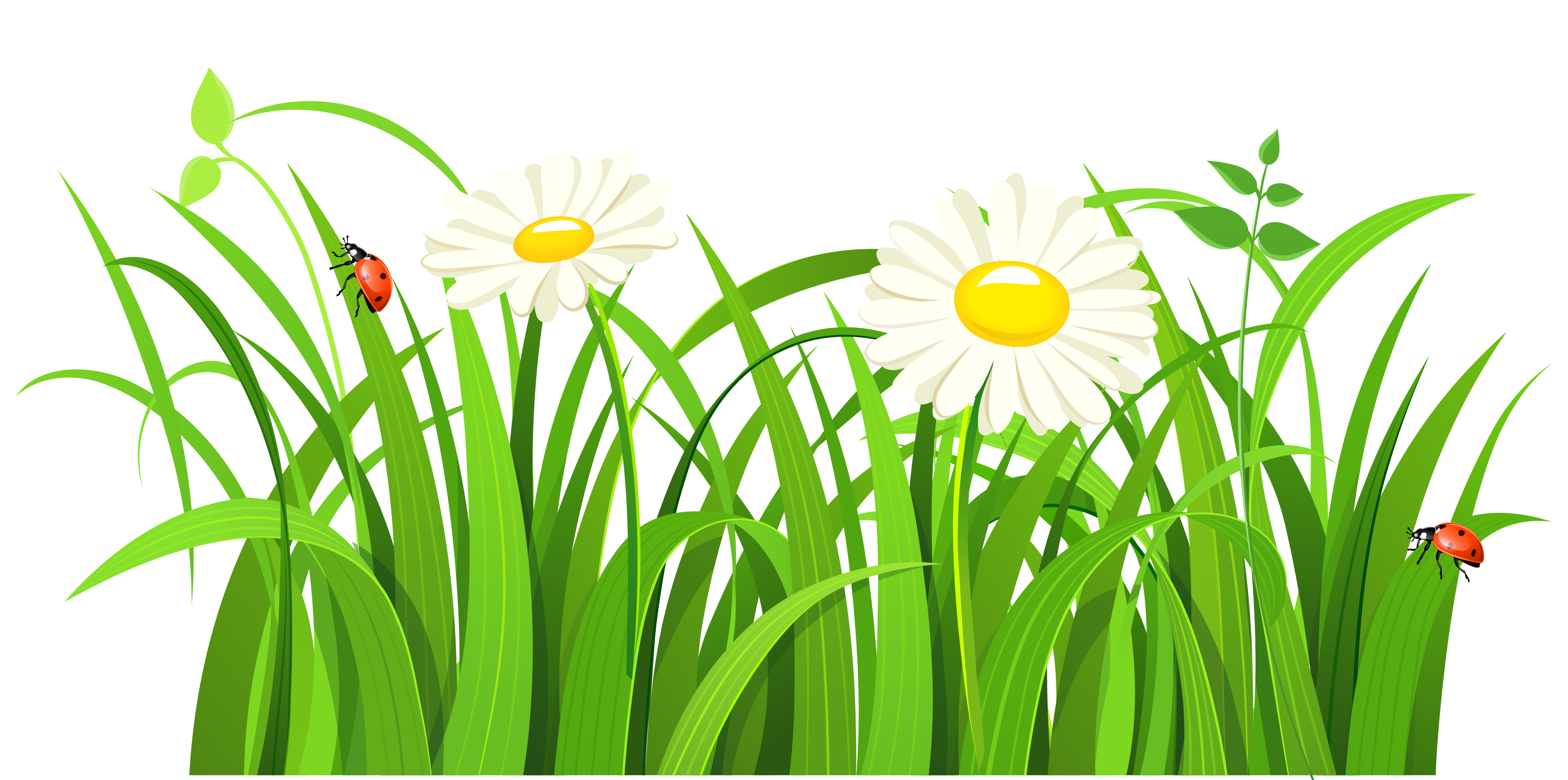 grass patch png clipart | bulletin board ideas | pinterest | grasses