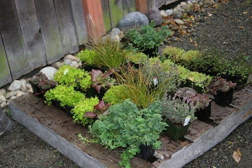 Recycle an old pallet and build a garden
