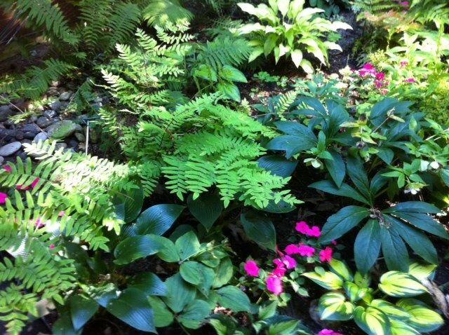 My cottage garden
