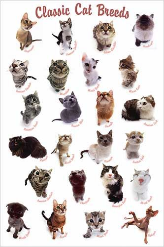Katzenrassen Der Welt Poster Some Top Unusual Cat Breeds On Earth | Stretched Canvas