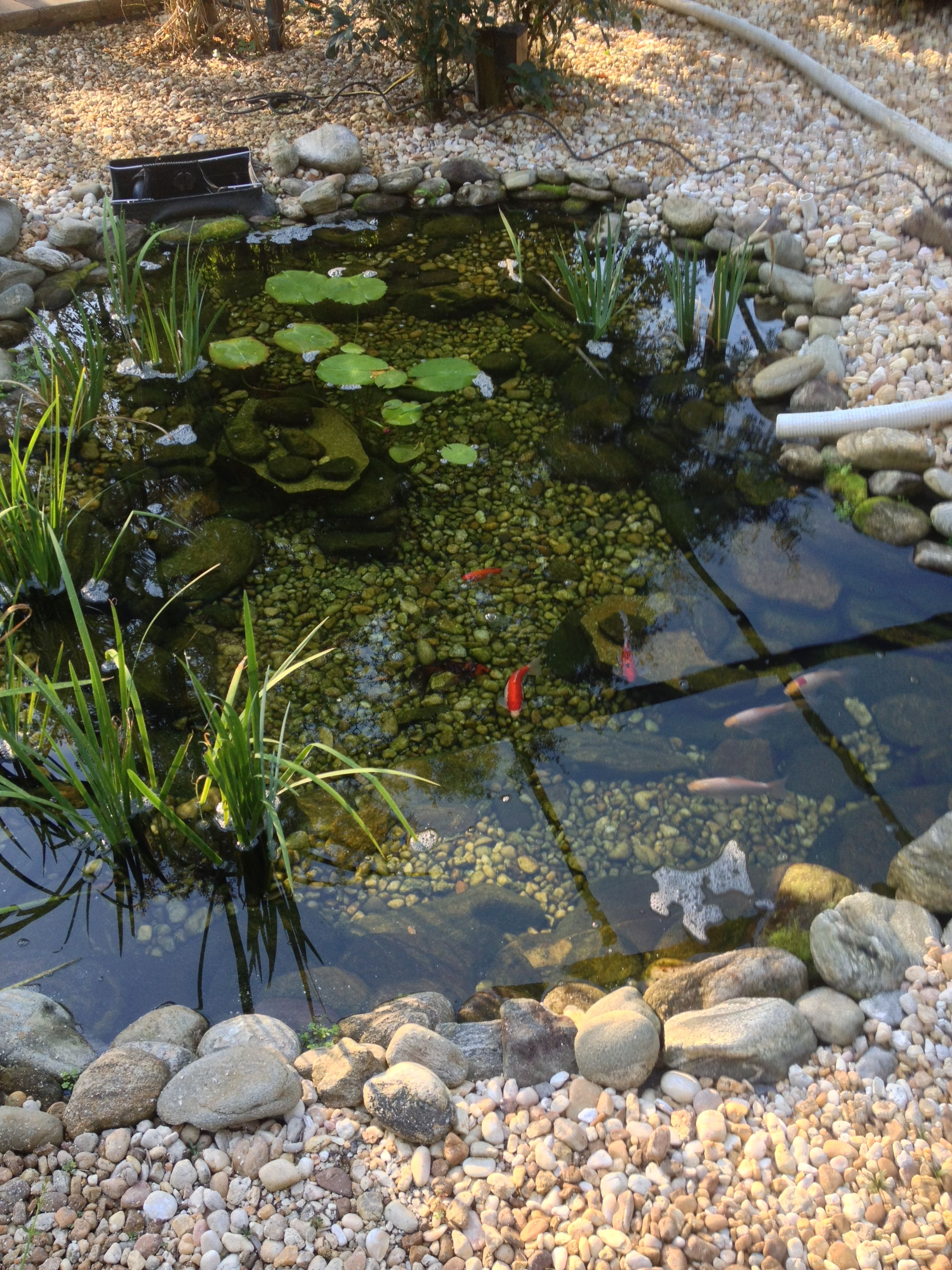 Before Pond / Water Garden cleaning by Nature Coast ...