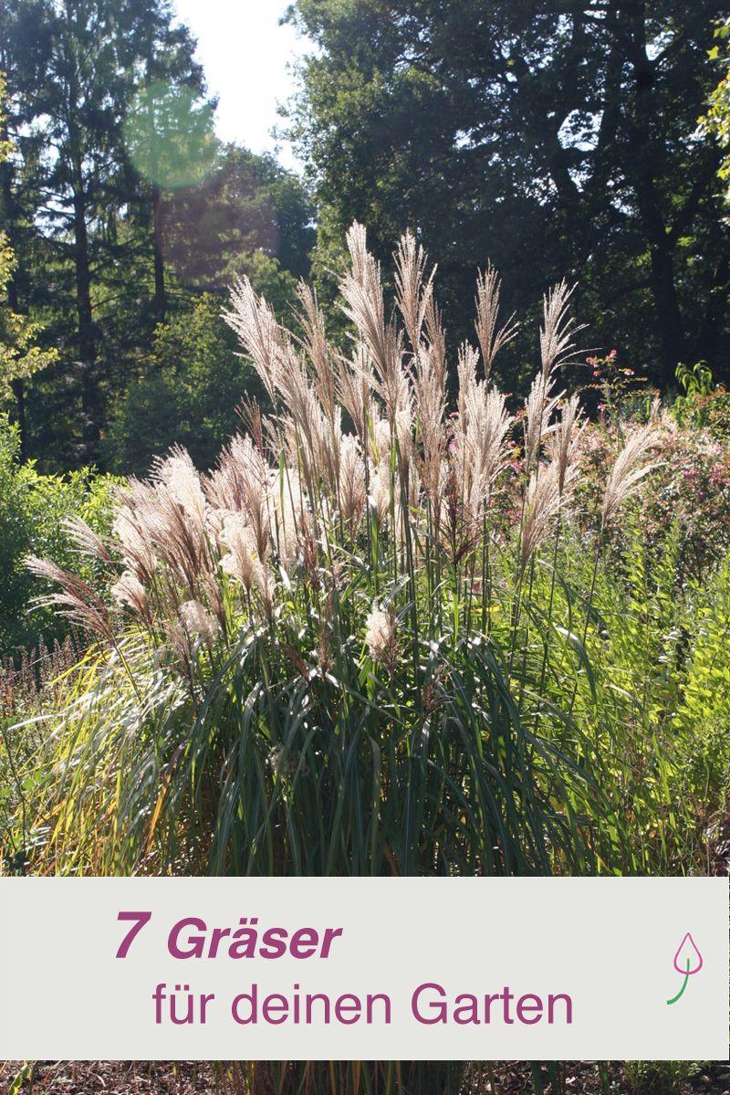 7 tolle ziergräser für deinen garten | gräser, sichtschutz und, Wohnzimmer dekoo