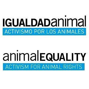 """Igualdad Animal y Equanimal se unen para luchar """"con más fuerza"""" por los derechos de los animales"""