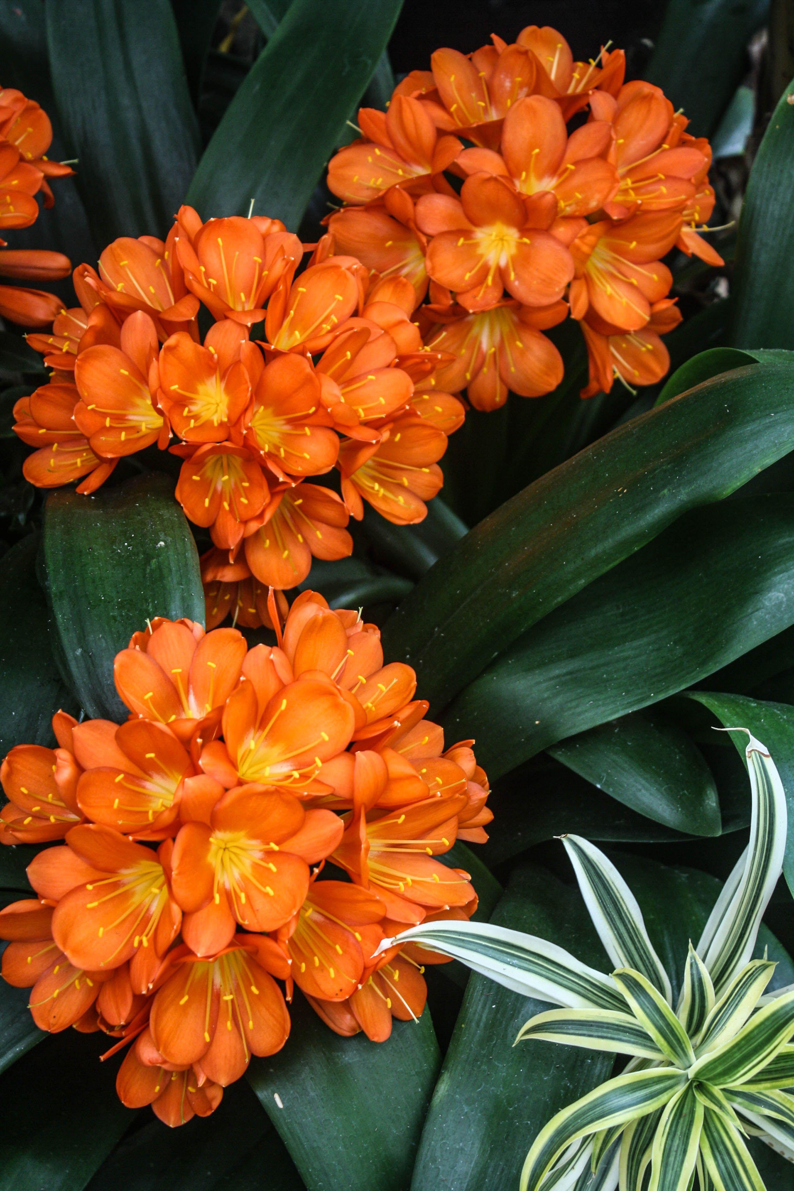Botanical center providence rhode island botanical