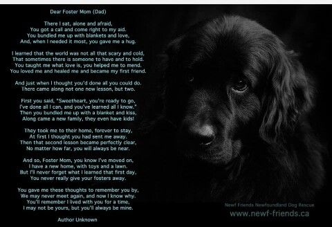 For Foster Parents Foster Mom Foster Dog The Fosters