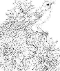 Resultado De Imagem Para Fairy Images Coloring Pages For Adult