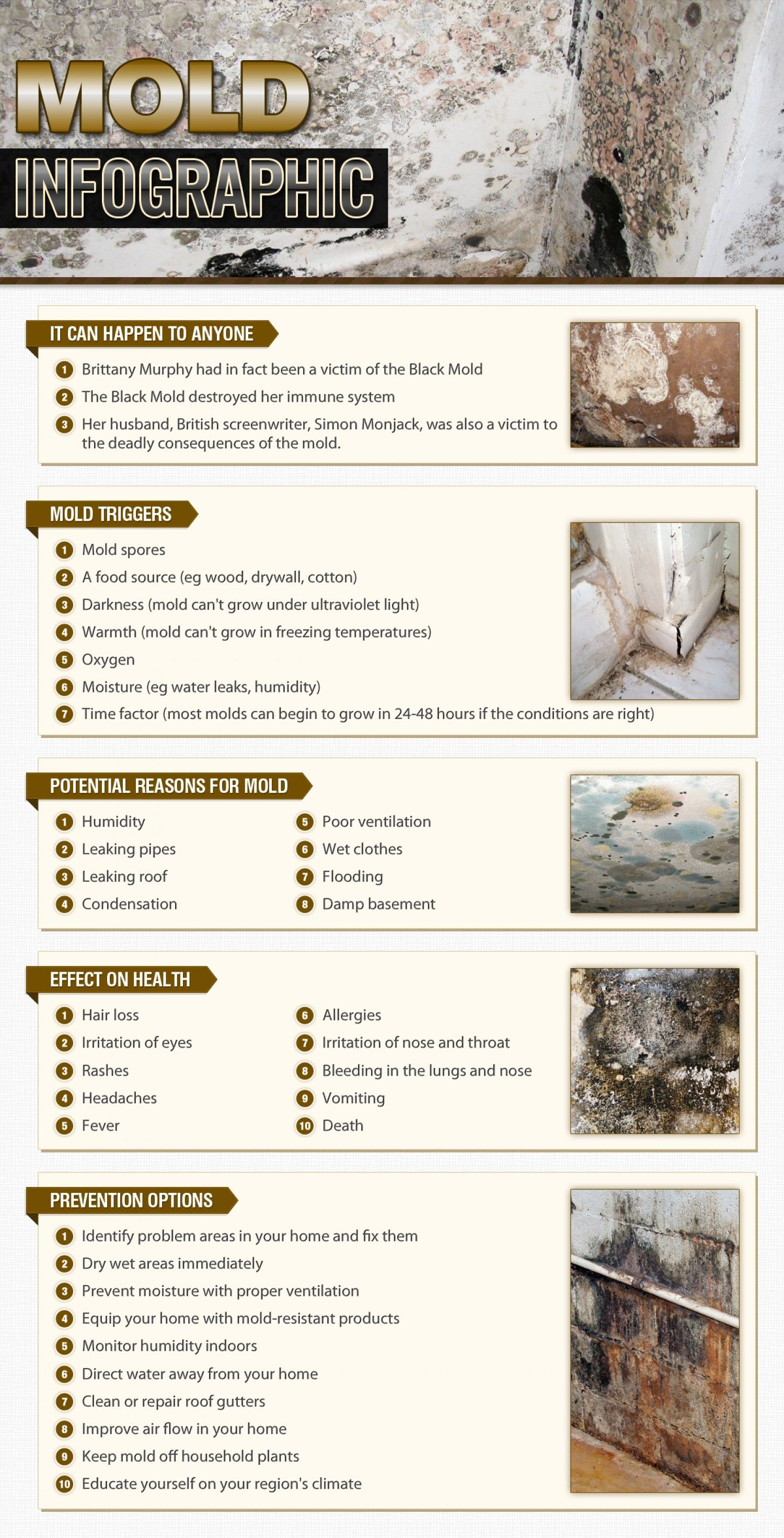 Mold Shared By 911remediation Published Feb 16 2017 In Business Get A Visual Look At Our Infographic That Include Triggers Potential Reasons
