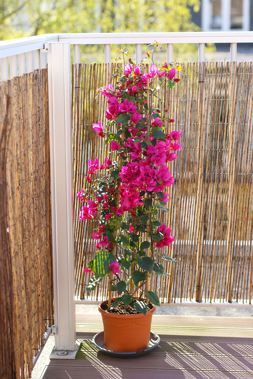 Mes 15 plantes chouchoutes pour décorer un balcon Fleurs