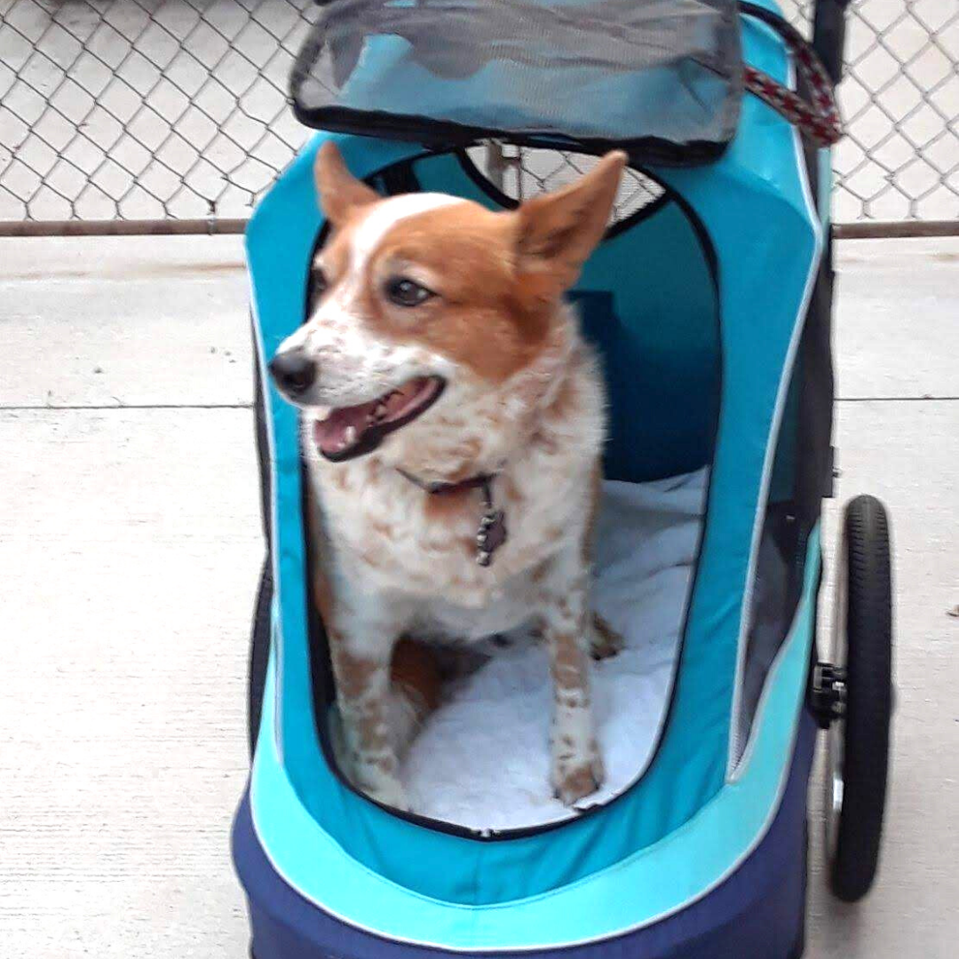 All Terrain Pet Jogger In 2020 Pet Stroller Pets Used Strollers