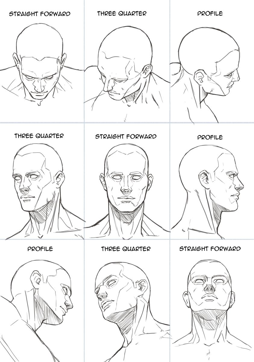 Human Head Sheet By Hoelho Anatomy Art Anatomy Sketches Human Figure Drawing