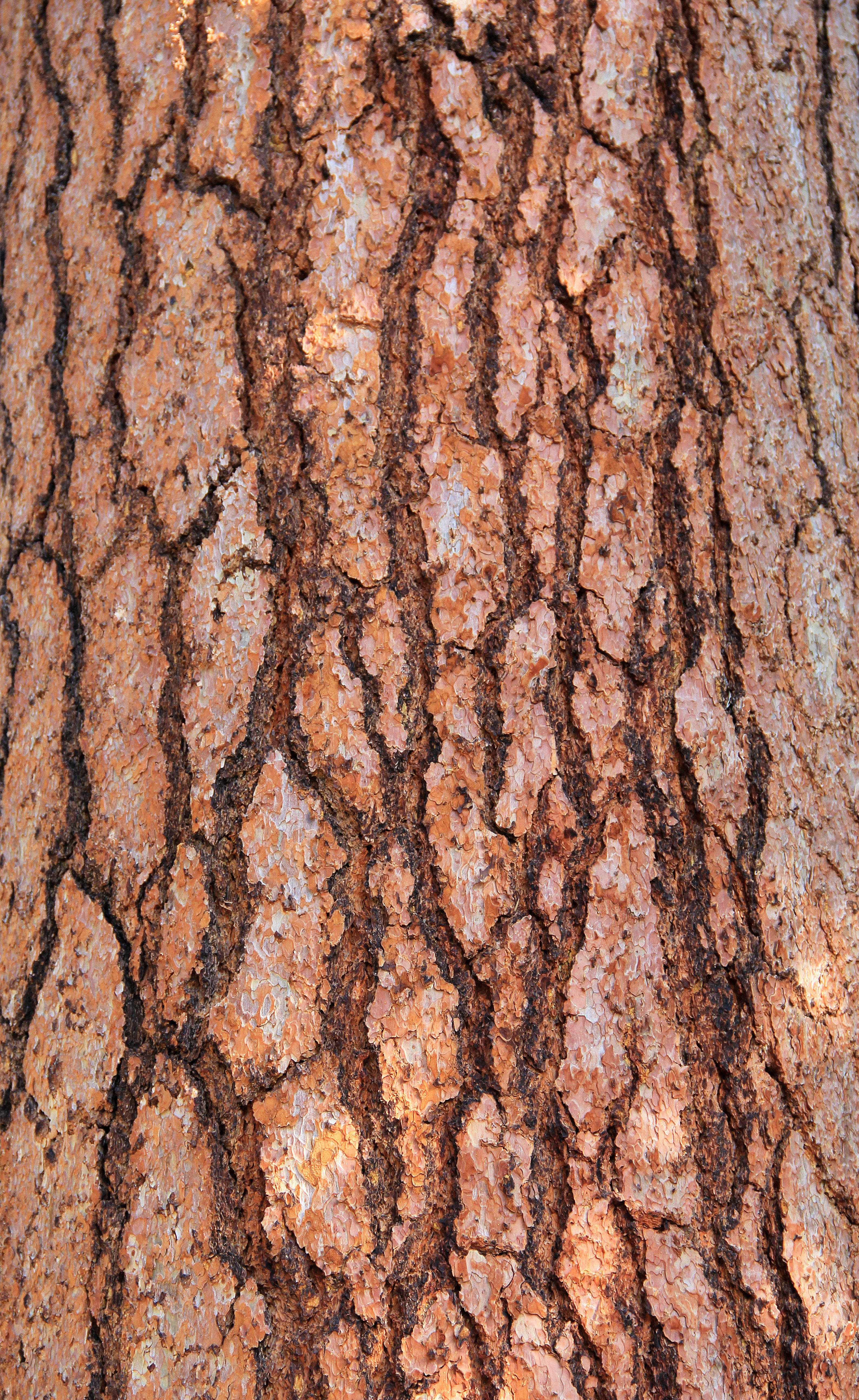 Wood Texture Tree Bark Large Red Wood Pieces Wooden Stock Photo