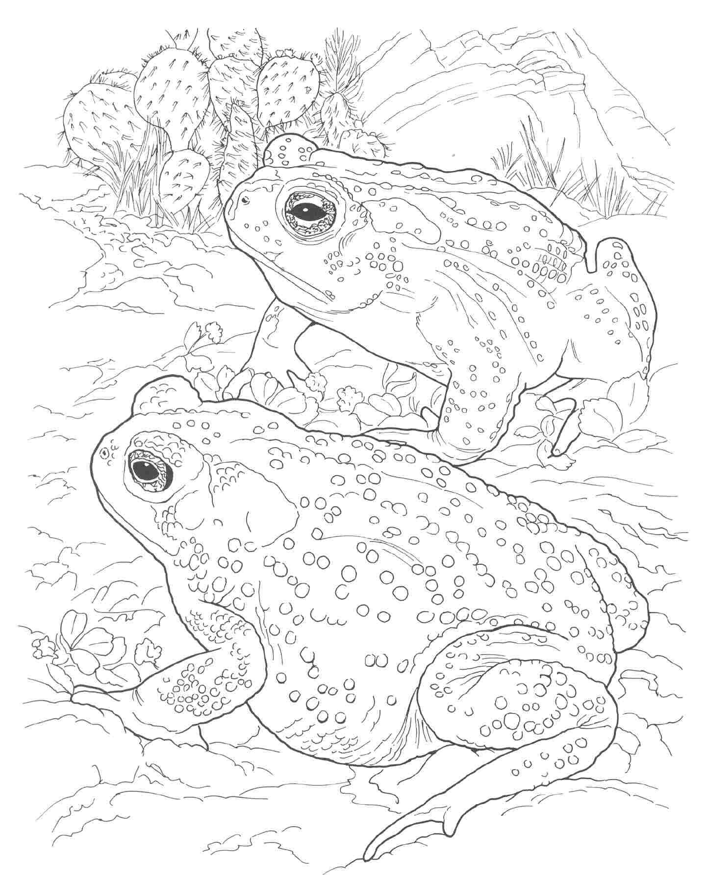 Rocky and bullwinkle printable coloring pages Google Search