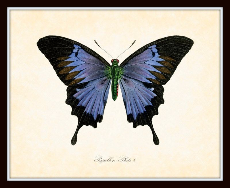 Vintage Butterfly Series 2 Papillon Plate 8 Art Print 8x10 Natural History Home Decor. $10.00, via Etsy.