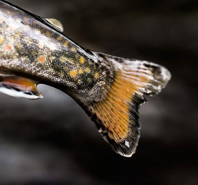 Michigan S Upper Peninsula Forever A Wilderness Fly Fishing Art Upper Peninsula Fly Fishing Flies Trout