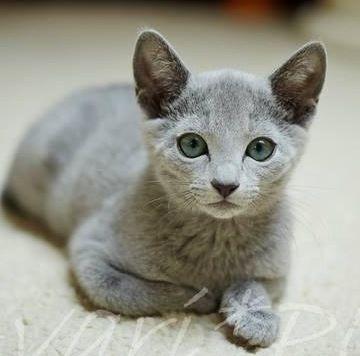 Knyygna On Cute Cats Pets Cats