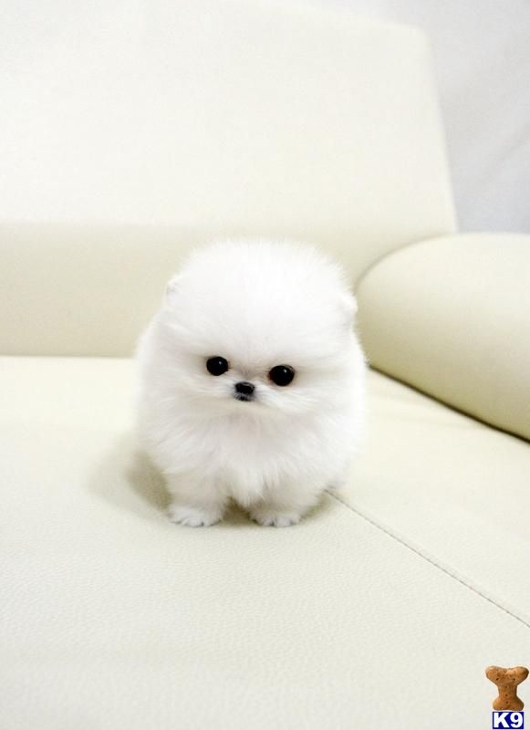 Do not be fooled by my fluffiness, there's a tantrum that's ...