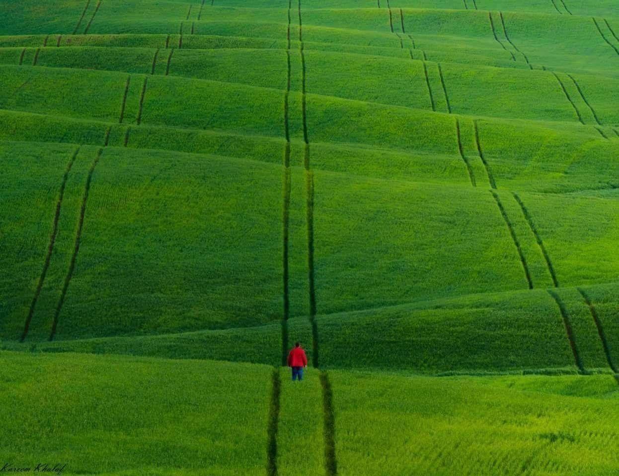 صورة من مزارع القمح في النقب جنوب فلسطين المحتلة تصوير كريم خلف