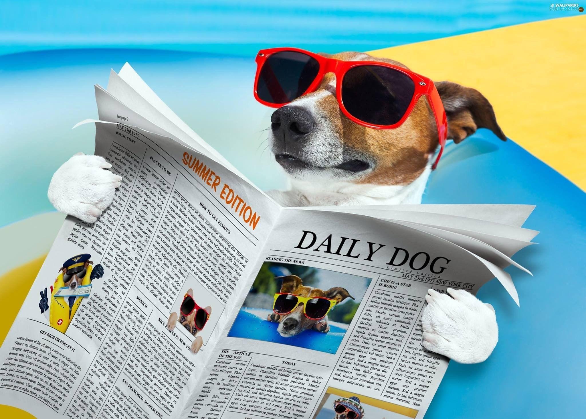Carta Da Parati Bambini Fanny Dogs: Pin Di Marilisa Paleari Su Jack