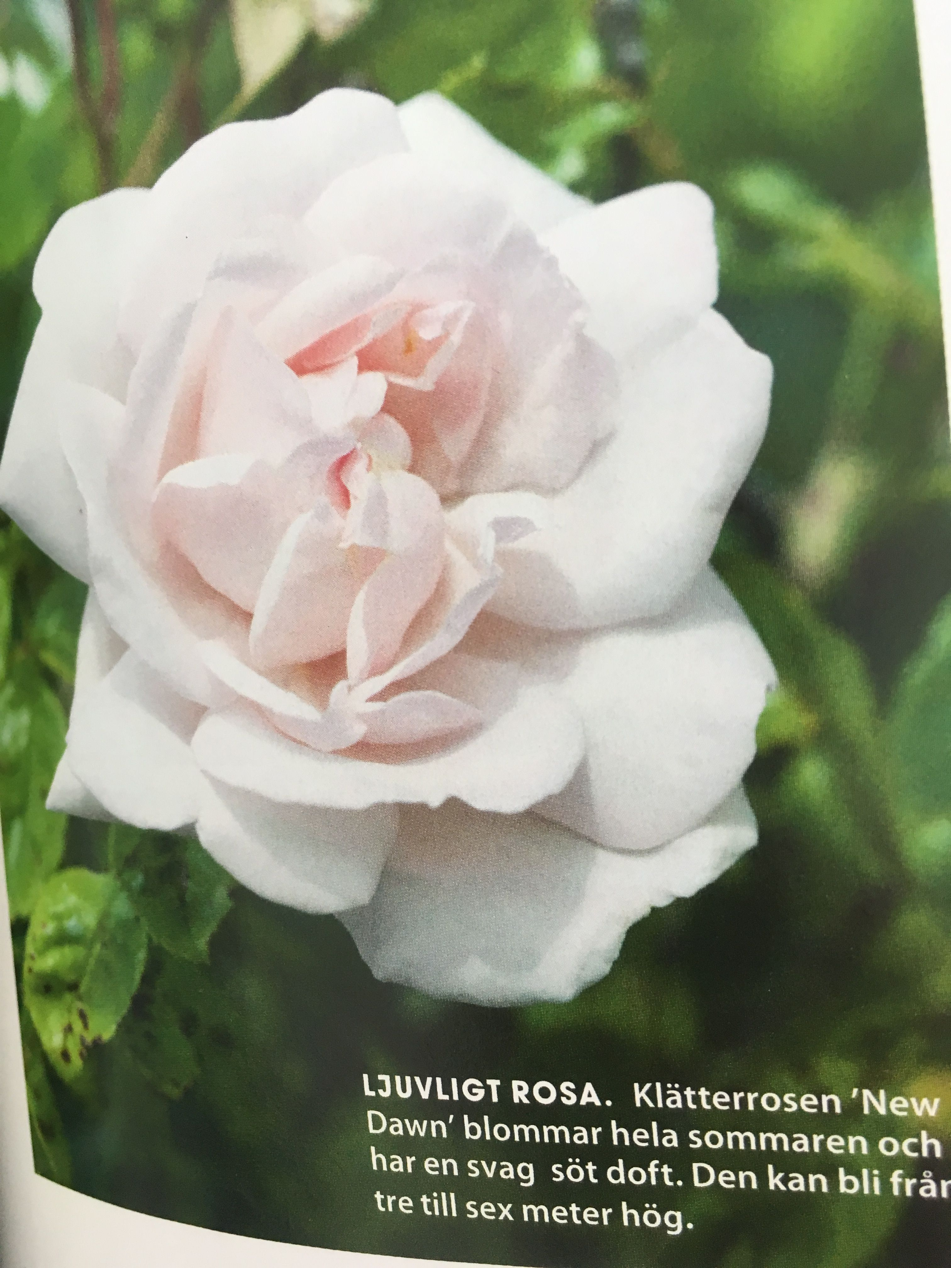 Pin by martinujonna andersson on trädgård pinterest