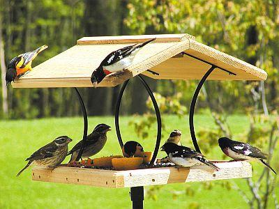 Merveilleux Bird Feeder More