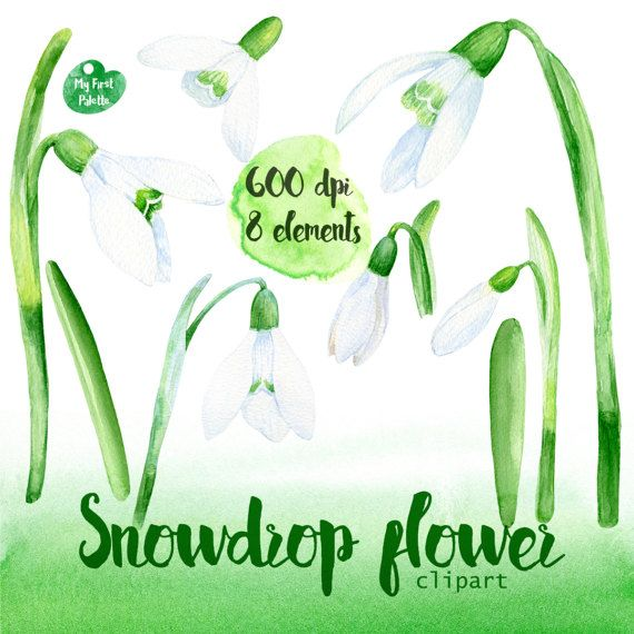 Watercolor Snowdrop Flower Clipart 600 Dpi Png By Myfirstpalette Clip Art Flower Clipart Watercolor
