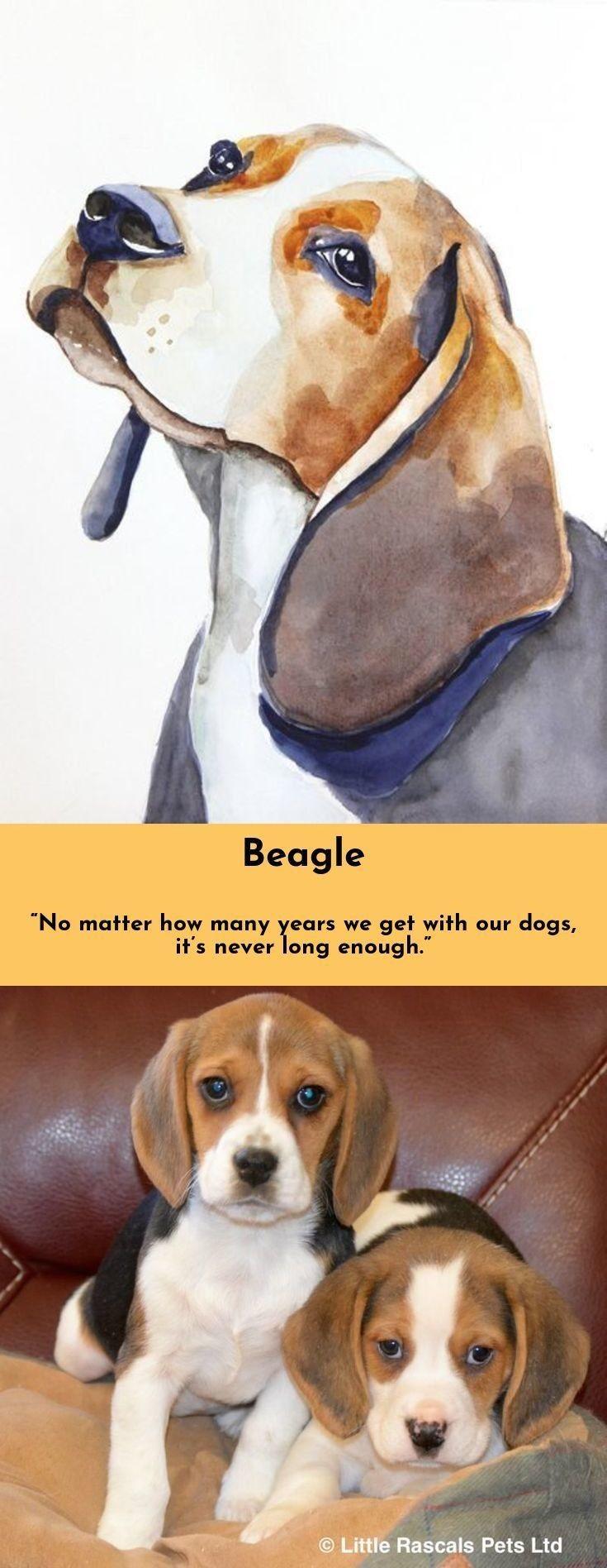 7 Best Dogs Breeds For People Allergies Best Dog Breeds Dog
